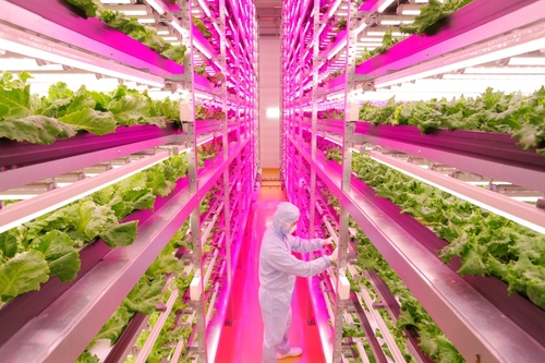 Lettuce See the Future: LED Lighting Helps Farming Go High-Tech In Japan 0