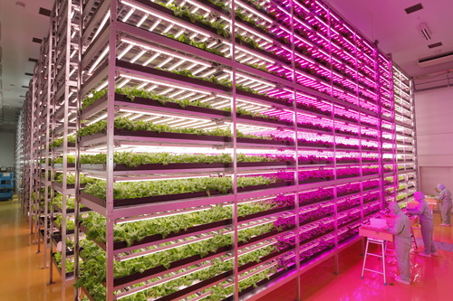 The Future of Agriculture? Indoor Farms Powered by LEDs 0